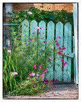 Wildflowers Grow near a Blue Gate